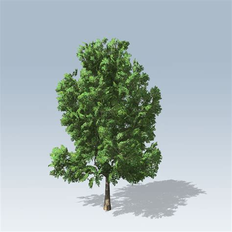 american sycamore american sycamore vfx speedtree store