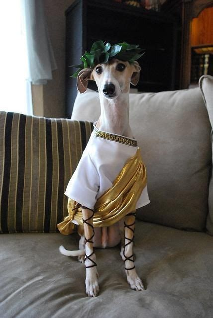 1000 images about toga party nye on pinterest