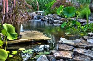 pond designs natural swimming ponds
