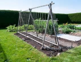 how to build a pole bean trellis pole bean trellis island kitchen gardens