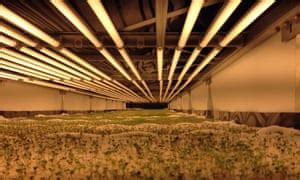 worlds largest vertical farm grows  soil sunlight