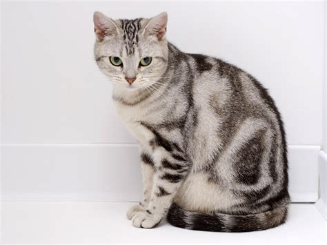 cat picturs cat animals pictures interesting facts all