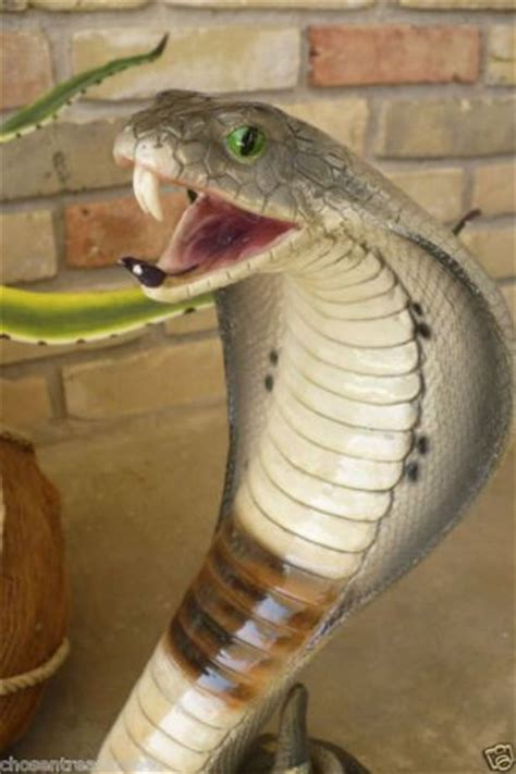 Garden Snake Cost 17 Best Images About Cobra Snake On Smiley