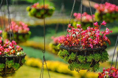 Small Flower Pot by 70 Hanging Flower Planter Ideas Photos And Top 10