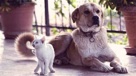 uri in dogs top 5 facts about uris in dogs and cats petcarerx