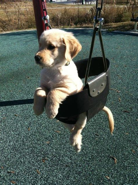 animal baby swing funny puppies 30 www funnypica com funnypica