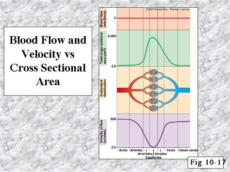 difference between area and cross sectional area blood flow and velocity vs cross sectional area