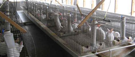 milanuncios pisos de alquiler zaragoza granja de conejos en venta en ejea fincas ejea fincas ejea