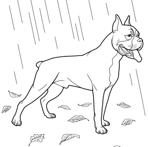 coloring pages of boxer puppies boxer dog coloring page free printable coloring pages