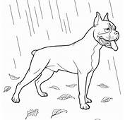 Boxer Dog Coloring Page  Free Printable Pages