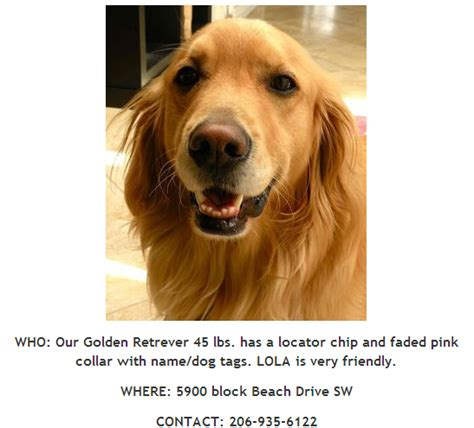 lost golden retriever lost lola the golden retriever