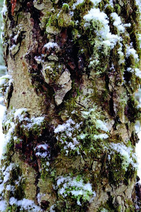 0008218439 the hidden life of trees the hidden life of trees montecristo