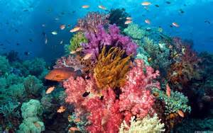 coral reef color the beautiful colors of coral reefs nature babamail