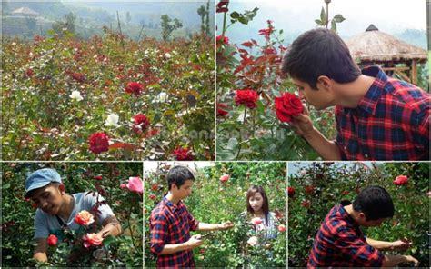 Js Lovekumis Putih Salem Kid wisata petik bunga mawar gumur spots liburan anak informasi event liburan