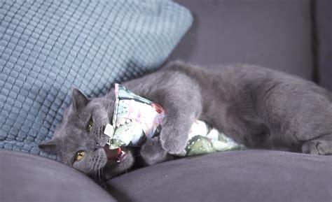 Handmade Cat Toys - minoumi handmade catnip cat toys 187 gadget flow