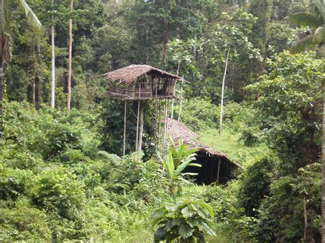korowai tree houses panoramio photo of tree house korowai