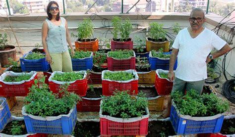 Mumbai Residents Convert Terrace Into Garden Grow 15 Vegetable Garden On Terrace India