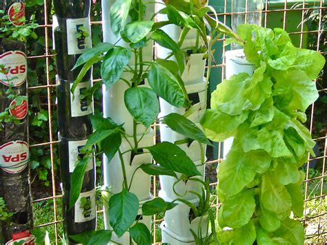 Vertical Garden Containers For Sale Vegetables Herbs And Flowers Growing In Containers