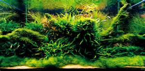 Home Decorating Tips For Beginners getting started with aquascaping aquascaping love