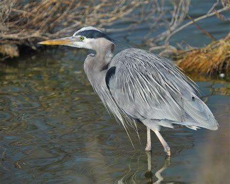 find wading birds tjs garden
