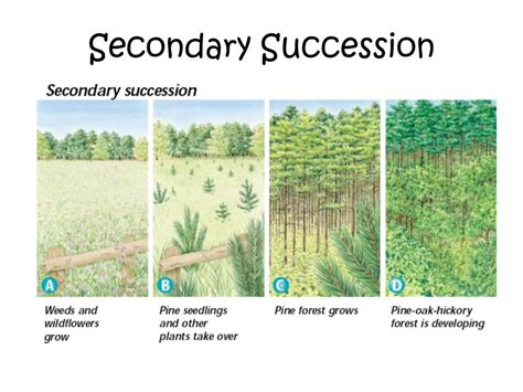 primary and secondary succession venn diagram warm up complete the following venn diagram in your