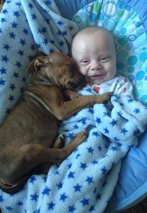 best cuddle dogs and pets dogs tips advice me
