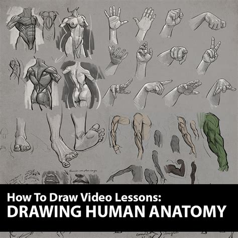 figure for drawing how to figure drawing tutorial drawing human anatomy lessons