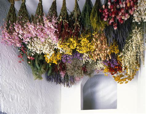 tips  harvesting drying  storing flowers