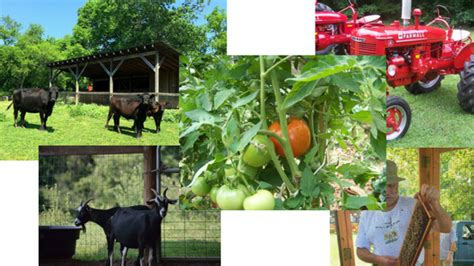 Farm To Table Nc by Farm To Table Alamance Parks
