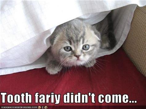Tooth Fairy Meme - funny tooth fairy memes