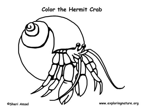 hermit crab template images