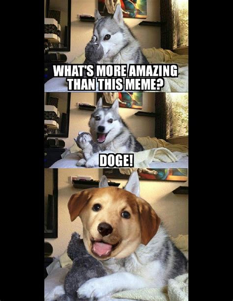 Know Your Meme Dog - advice pun dog pun dog know your meme