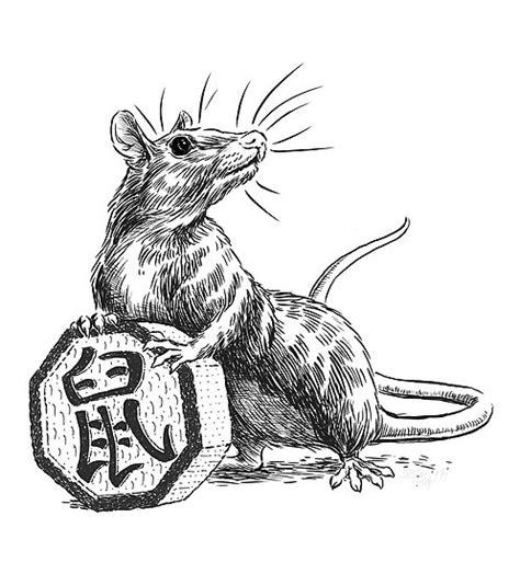 new year zodiac rat astrology the rat 1984 stix