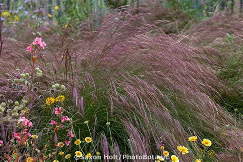 plant awns 131 best great plants for socal gardens images on