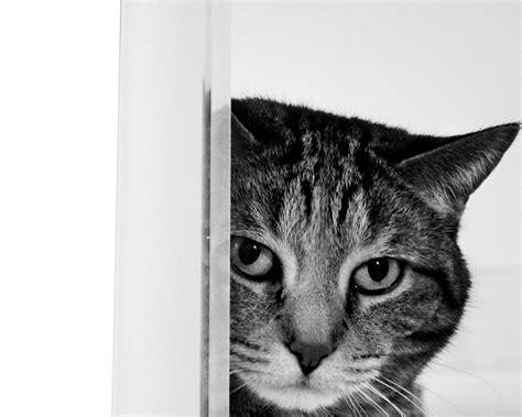 cat wallpaper  home wallpapersafari