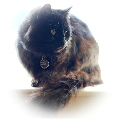 how to your to like cats how to your cat bark time