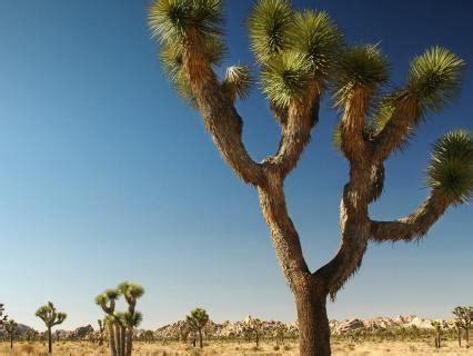 desert san diego zoo animals plants