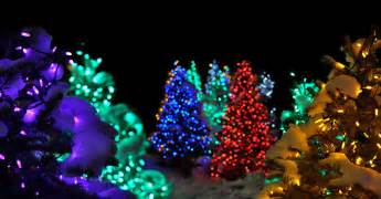 Christmas trees covered in snow free pictures amp stock photos wild
