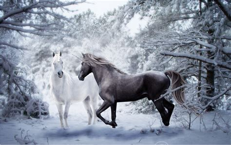 imagenes en blanco y negro de caballos custom 3d horse wallpaper a black and white for the