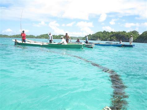 Bibit Rumput Laut kebun bibit rumput laut usaha pembudidaya untuk bangkit