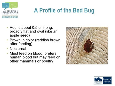 how to keep bed bugs off you how to keep bed bugs off you how to keep bed bugs off you