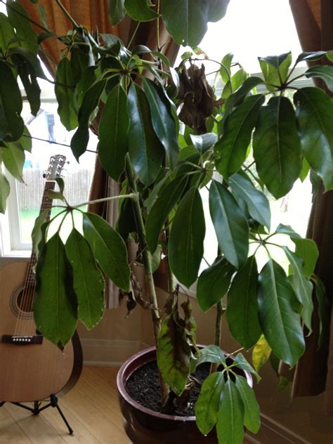 house plant identification house plant identification www imgkid com the image