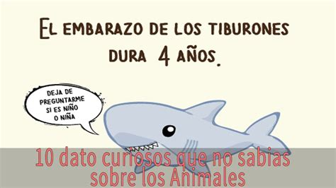 lo que no sab 237 los curiosos 10 datos curiosos que no sab 237 as sobre los animales youtube