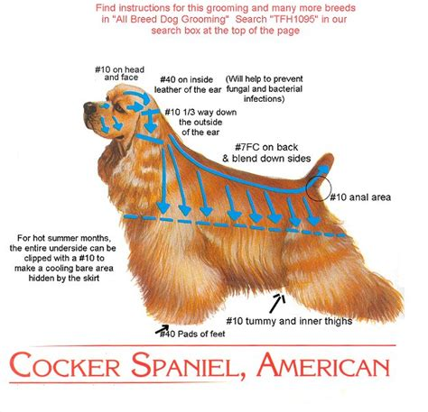 grooming guide 5 perfectly groomed celebrities cocker cut instructions for groomer all creatures great