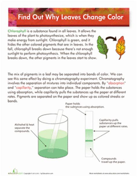 why do leaves change color worksheet education