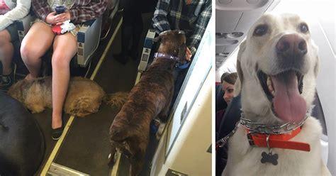 airlines break   rules  pets  escape fires