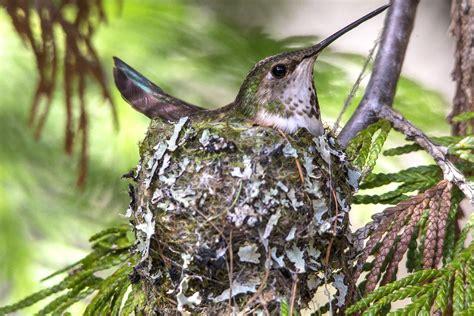 wild birds decorate  nests