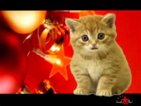 imagenes de feliz navidad con gatitos el gatito del a 241 o nuevo youtube