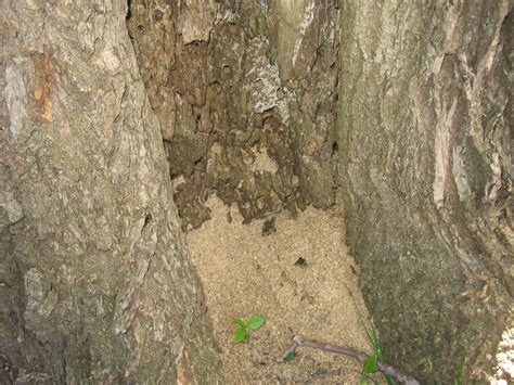 carpenter ants dead on floor carpenter ants in trees news
