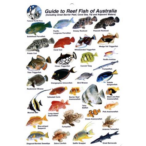 the ultimate guide to hawaiian reef fishes sea turtles slates books magazines